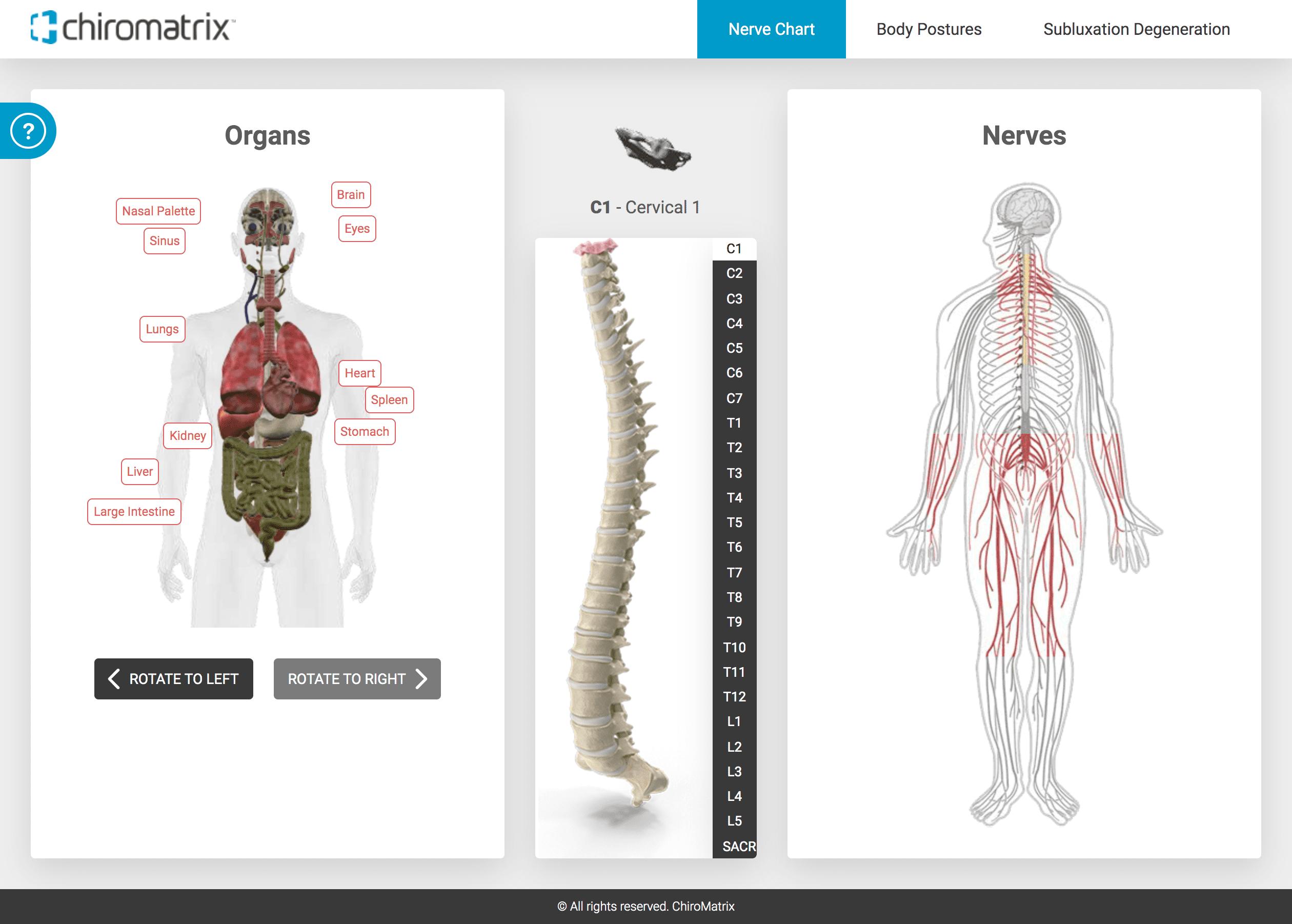 Screenshot of the 3D Spine Simulator