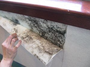 Gyprock being peeled back to reveal mould