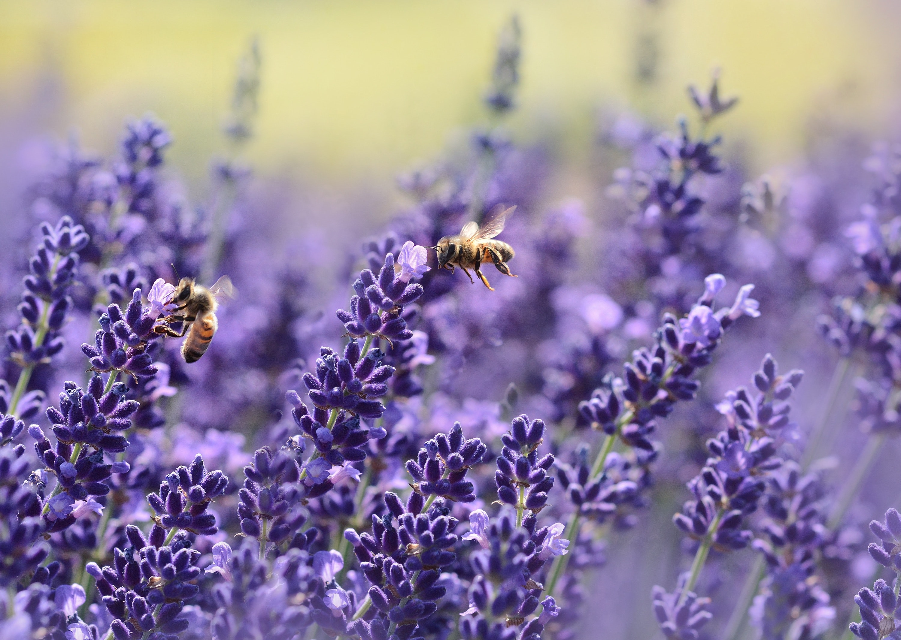 Why Bees are Important to the Ecosystem in Orange County