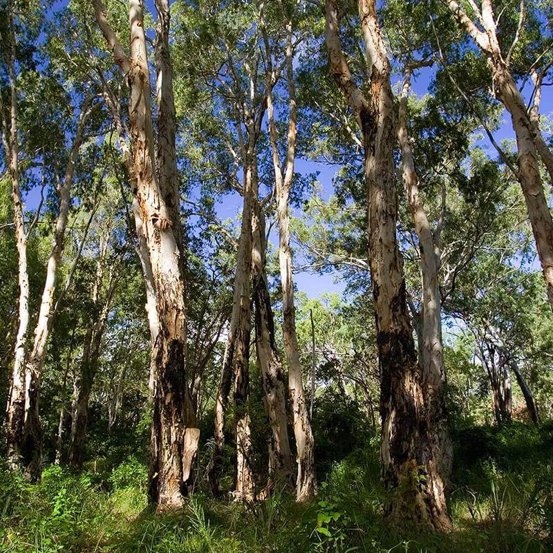 A dense bush tree forest.