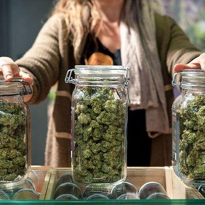 Cannabis 101 Course