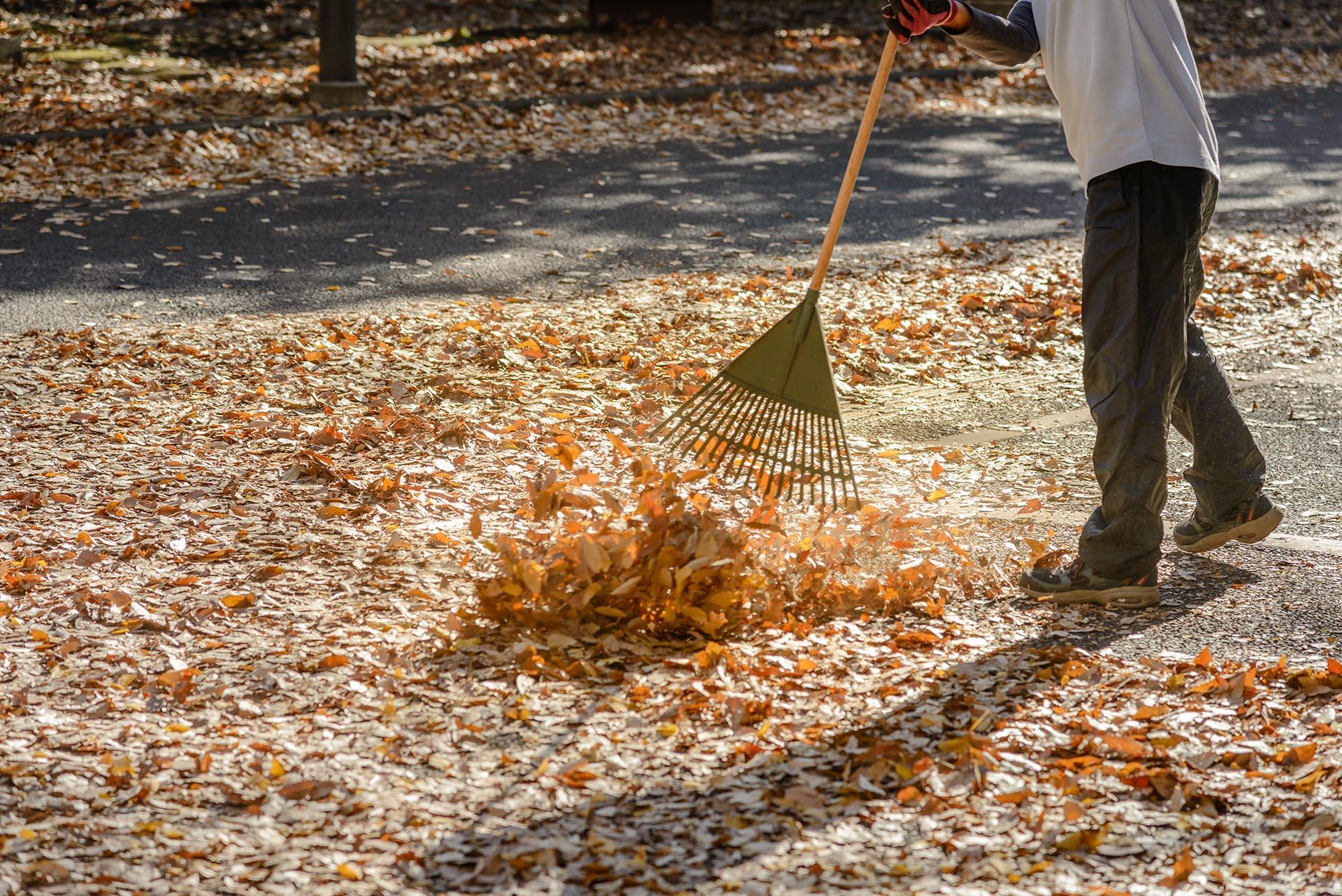Yard Cleanup