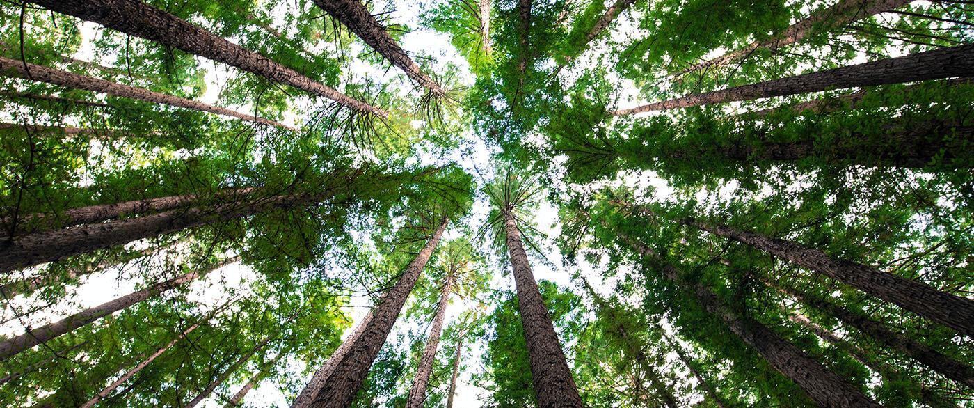 Naar de hemel kijken vanuit een bos