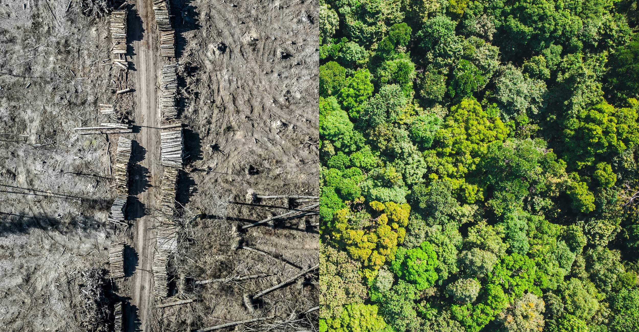 ecocide forest