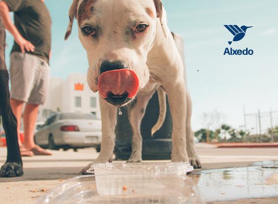 Dog drinking water.
