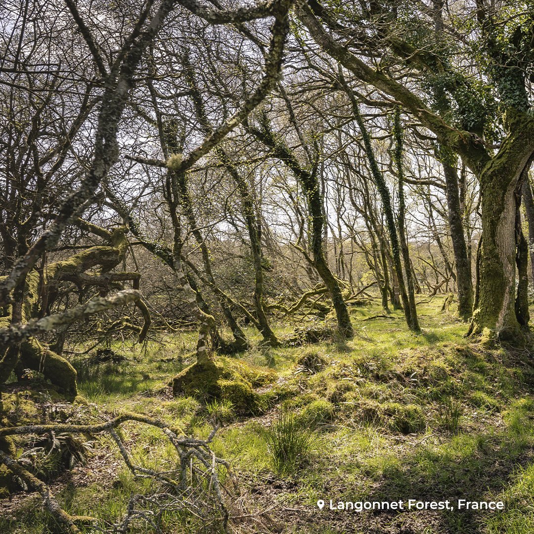 EcoTree La Trinité-Langonnet Forest