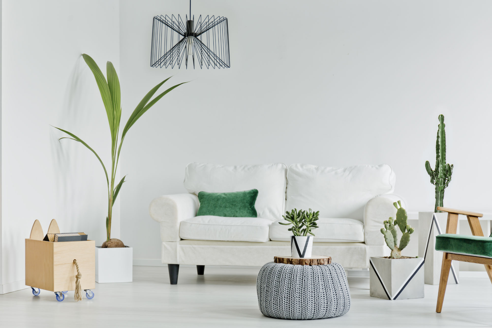 The Power of Plants: 10 houseplants to purify the air in your home