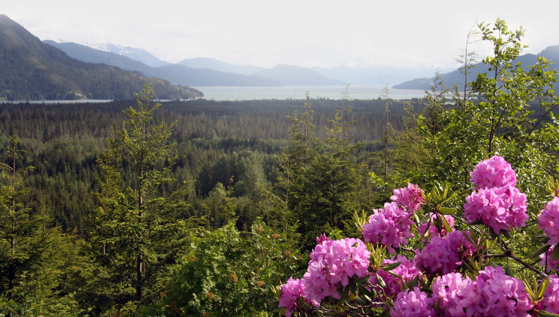 A view of the mountains and forest with a pink flower in the foreground.