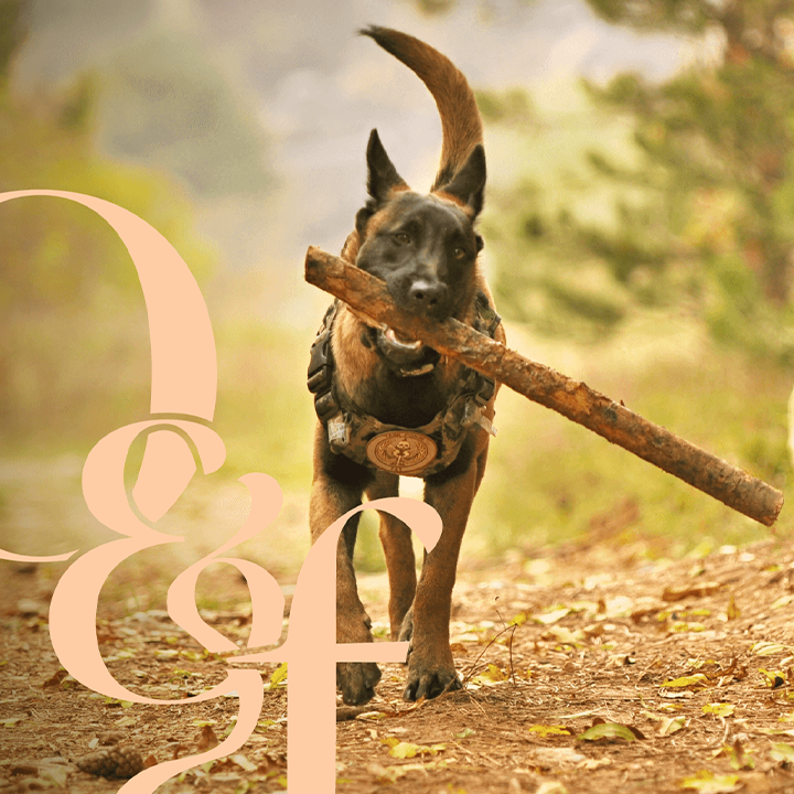 Happy dog holding stick with Ollie & Fox logo mark in the corner