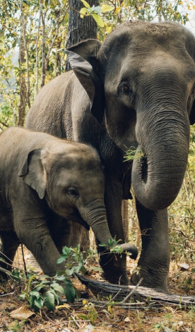 two elephants including a mother and her baby