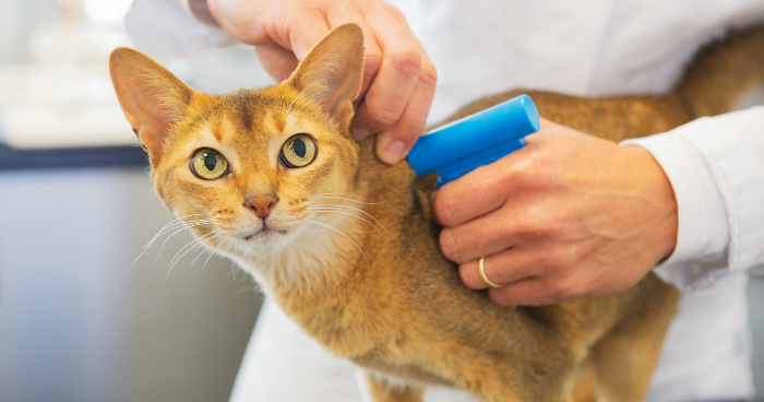 What Is A Microchip? Should You Microchip Your Cat or Dog?