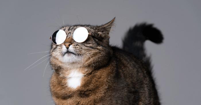 10 Nama Kucing Paling Popular di Malaysia