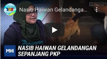 NASIB HAIWAN GELANDANGAN SEPANJANG PKP   MHI - Part 2