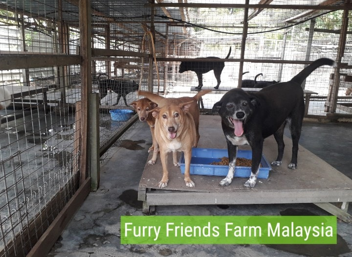 """May be an image of dog and text that says """"Furry Friends Farm Malaysia"""""""