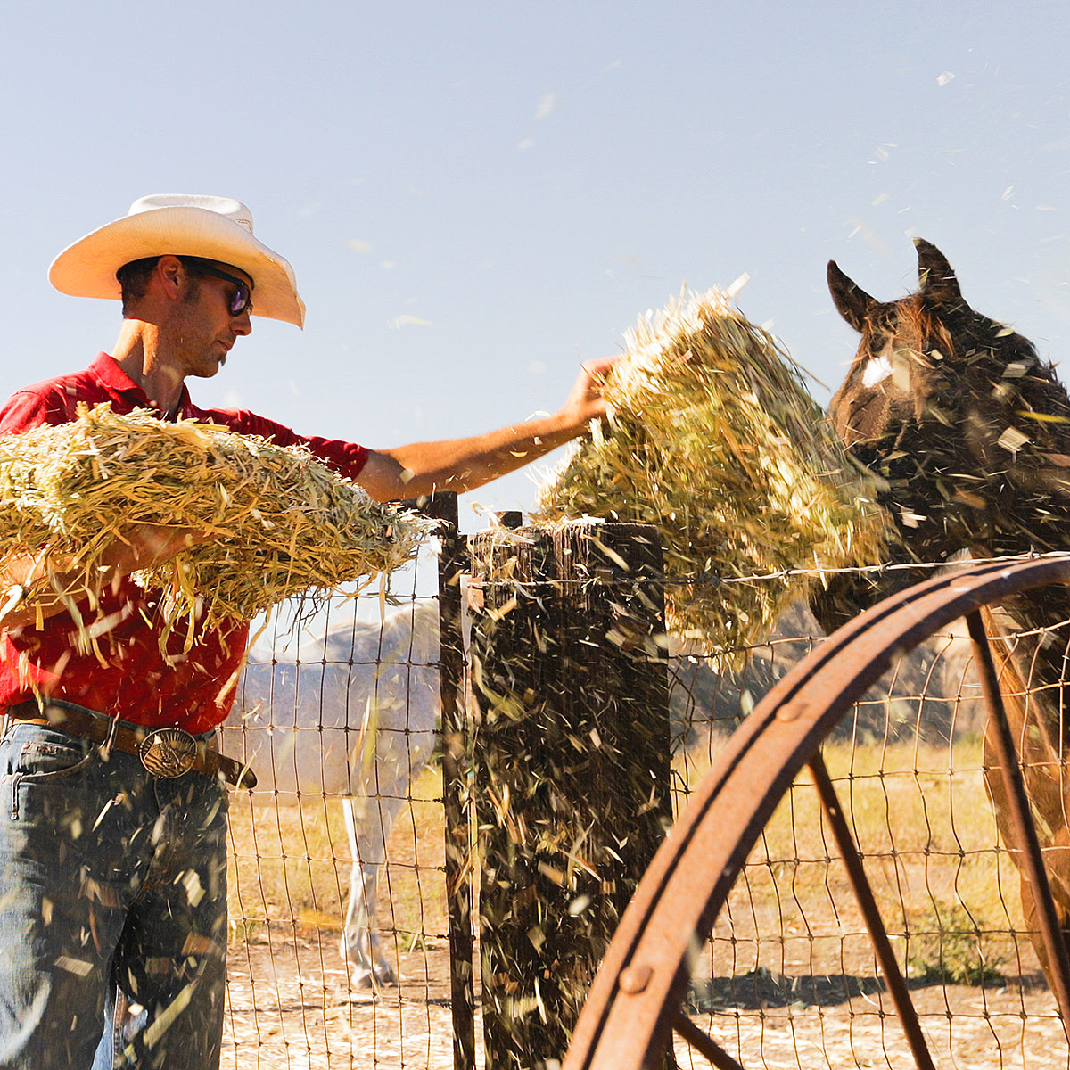 Photo of TIm Borland passing hay over a fence to a hungry horse.