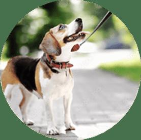 Behaved dog