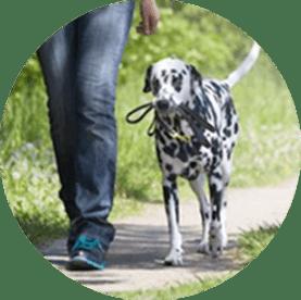 Off-leash dog