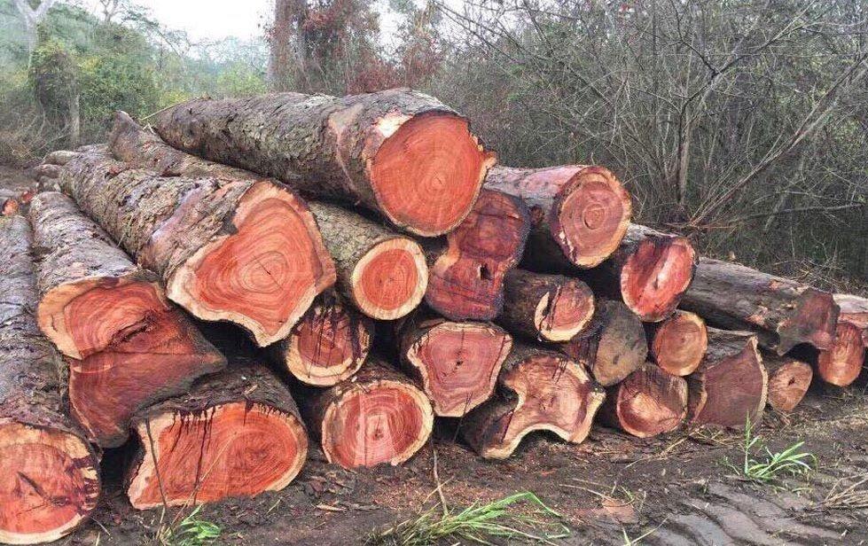 Các loại gỗ hương