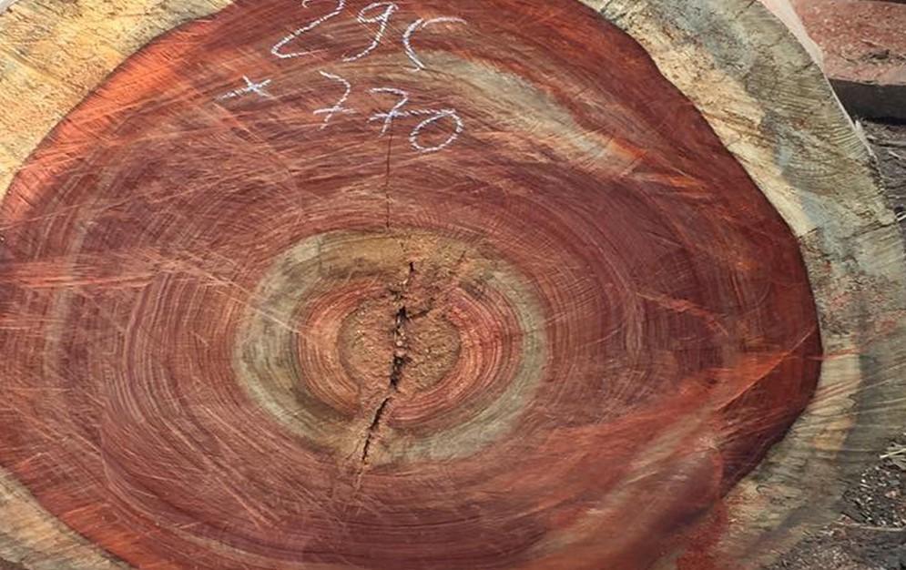 Lõi gỗ hương vân lạ mắt