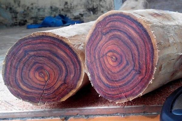 Đặc tính nổi bật của gỗ sưa