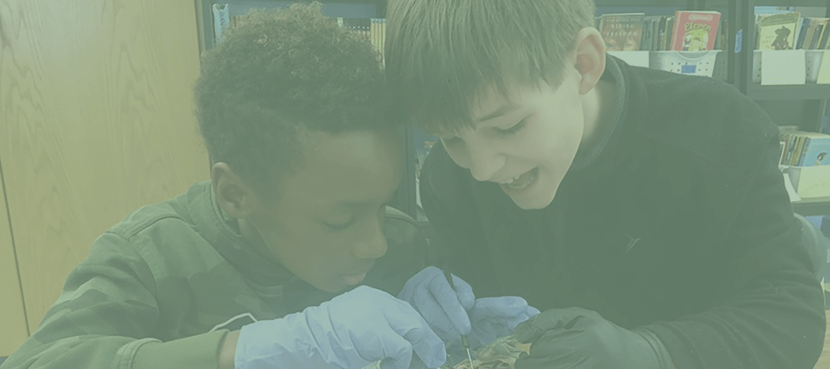 Two students dissecting a frog