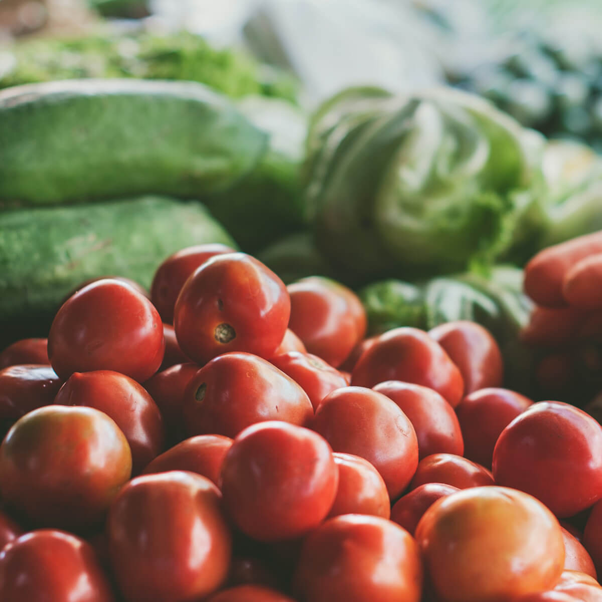 Photo of fresh produce with tomatoes, and lettuce, and carrots