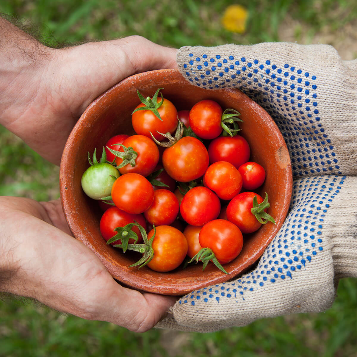 Photo of hands of two people holding a bowl of tomatoes