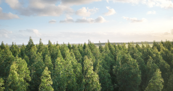 Introducing the Joro Carbon Portfolio